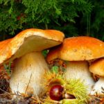 Диета магги: можно ли грибы?